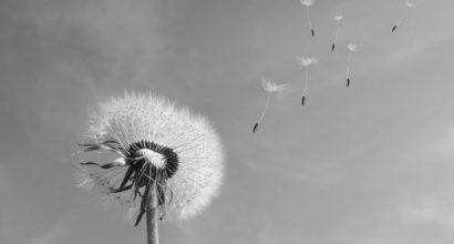 Versicherungsmakler, Vorsorgeexperte und Kreditmakler B-Quadrat | Begräbniskosten vielen nicht bewusst